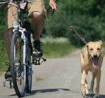 cane trainato da bicicletta