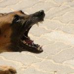 morso cane randagio