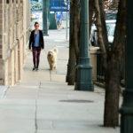 chi porta il cane a spasso paga i danni