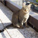 Fpv o panleucopenia felina