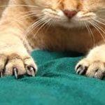 abitudini del gatto