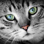 adottare un gatto o due