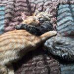adozione di coppia di gatti