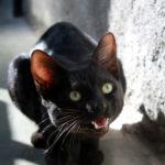 anoressia nel gatto