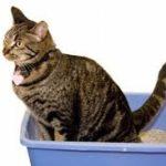 gatti e lettiere