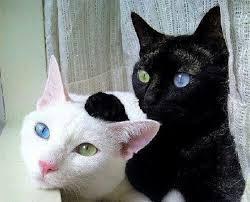 "alt=""coppia di gattini"""