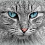 gatto e trasloco cosa fare