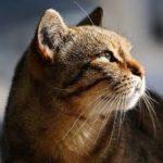 se il gatto barcolla