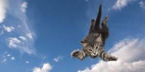 """alt=""""cosa succede ad un gatto quando cade """""""