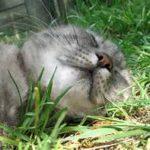 gatto che dorme in giardino