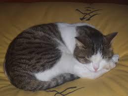 """alt=""""gatto che dorme"""""""