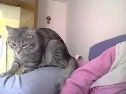 """alt=""""gatto che impasta"""""""