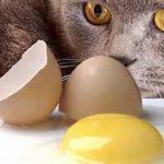 cibi da evitare ai gatti