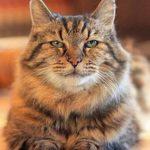 obesità del gatto