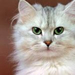 """alt=""""gli occhi del gatto"""""""