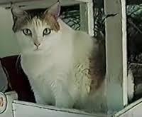 """alt=""""Creme Puff il gatto che ha vissuto 38 anni"""""""