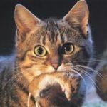 il gatto e le prede