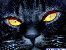 """alt=""""la spiritualità del gatto"""""""