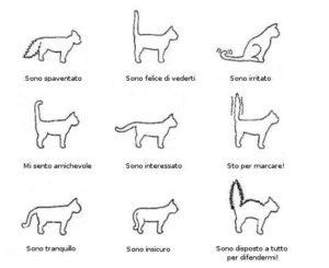 """alt=""""le posizioni che può assumere la coda del gatto"""""""