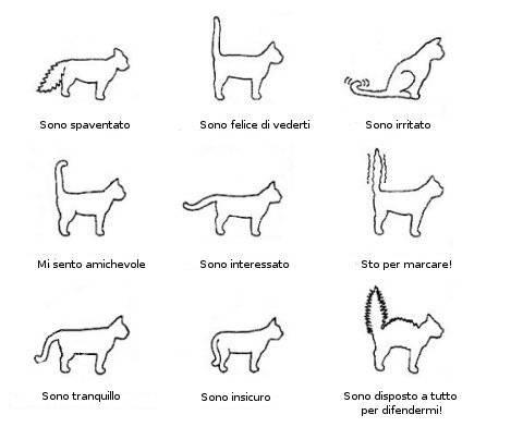 la posizione della coda del gatto