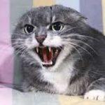 le pupille del gatto