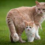 mamma-gatta-e-gattini