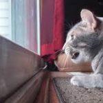 quando il gatto vede un uccellino
