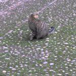 il gatto, la coda e la felicità