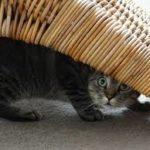 patologie del gatto
