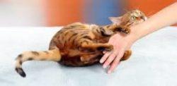 perchè un gatto quando gioca graffia le mani