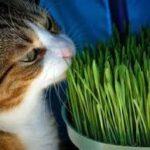 l'erba gatta fa bene ai gatti