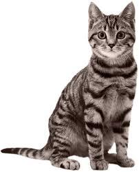 domande frequenti sui gatti
