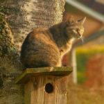 perché il gatto ama stare in alto