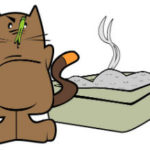 perché il gatto copre le feci
