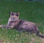 perché il gatto mangia erba