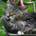 perché il gatto si mangia le unghie