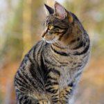 quanto vive un gatto