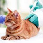 vaccini per gatti