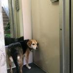 gli animali sono ammessi in ascensore