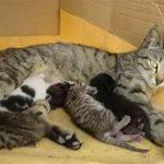cambio alimentazione nei gattini