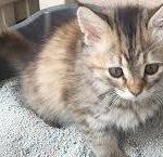 come educare un gattino alla lettiera