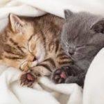 il sonno dei gattini