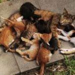 istinto materno delle gatte