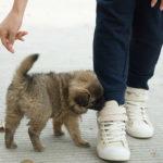 consigli per adottare un cucciolo