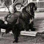 il cane ha bisogno del padrone