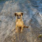 come approcciare un cane sconosciuto