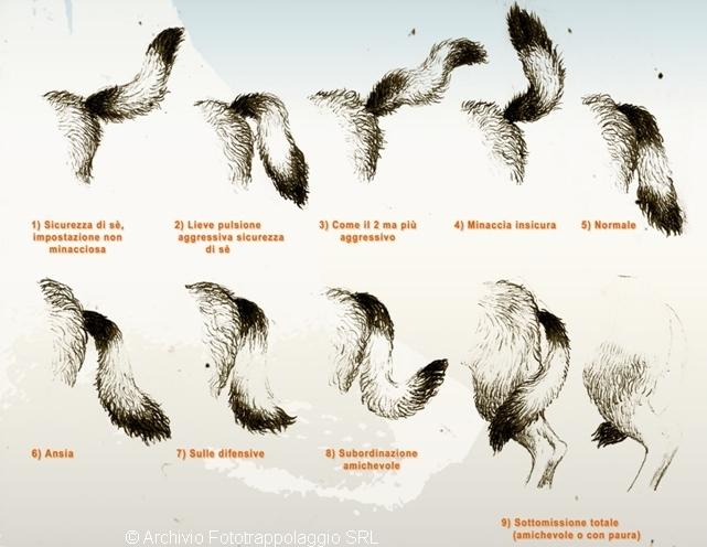 significato delle posizioni della coda