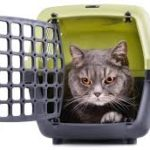come mettere un gatto nel trasportino