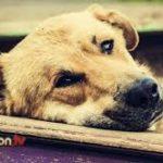 racconto di un cane abbandonato