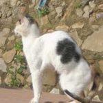 malattie della tiroide nel gatto